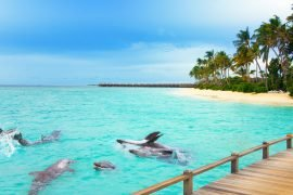 ummahtrip_maldives-tour_dolphins_d2-halal-tour-trip-muslim-travel
